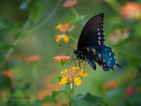 Butterfly Clemson University Gardens