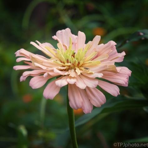 Flower, Best I've Got