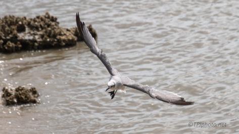 Watching A Gull