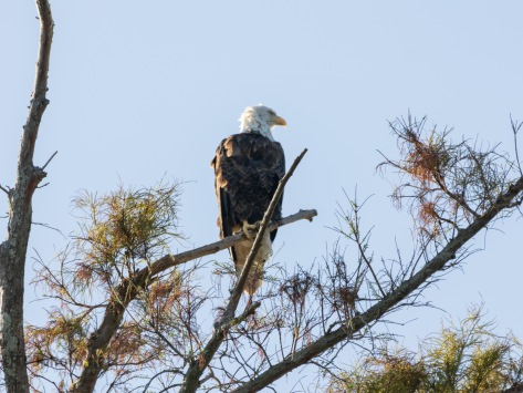 Watching And Waiting, Eagle