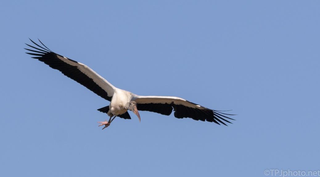 Slight Miscalculation On My Part, Stork