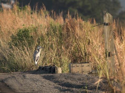 Day Break On A Marsh Dike