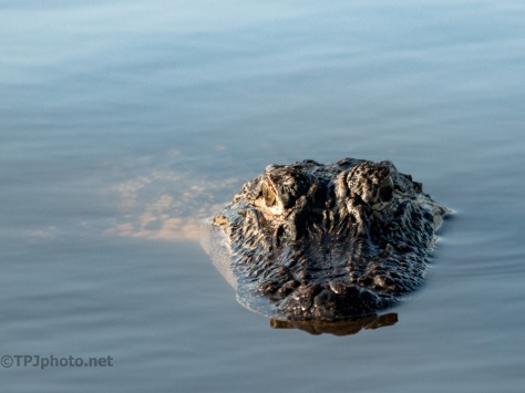 Another Watcher, Alligator
