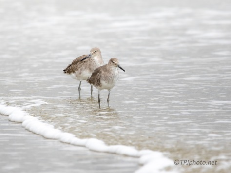 Willet Going By