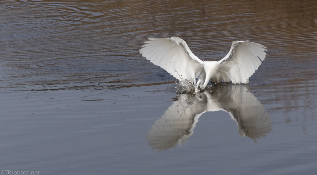 Enthusiasm, Egret