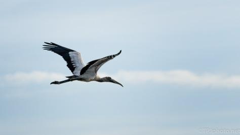 Stork Overhead