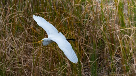 No Place To Land, Egret