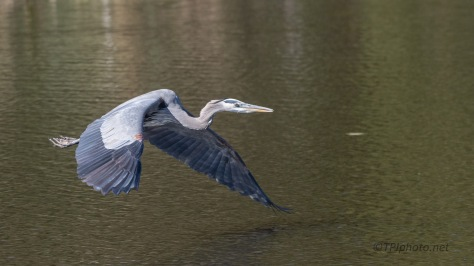 Great Blue Sailing On By
