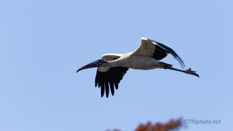 Wood Stork, New Location