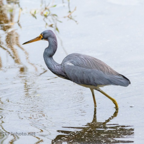 Tricolored Leisurely Stroll