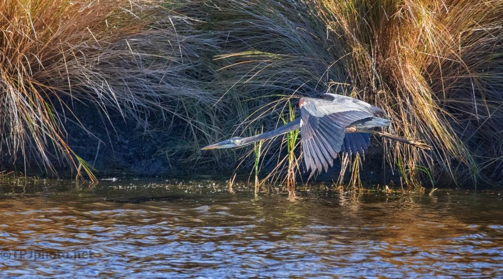 Full Speed Ahead, Heron