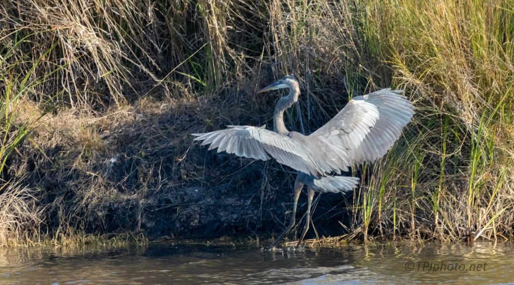 Soft Landing Heron