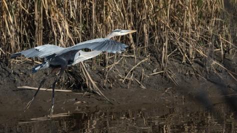 Paper Thin Heron