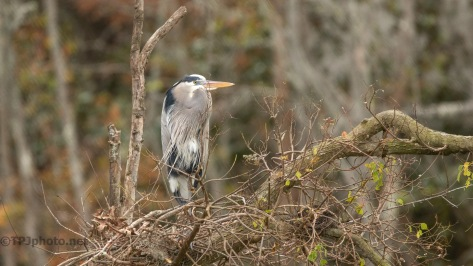Now The Wait For Spring, Heron