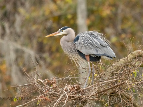 Looking For That Special Lady, Heron.
