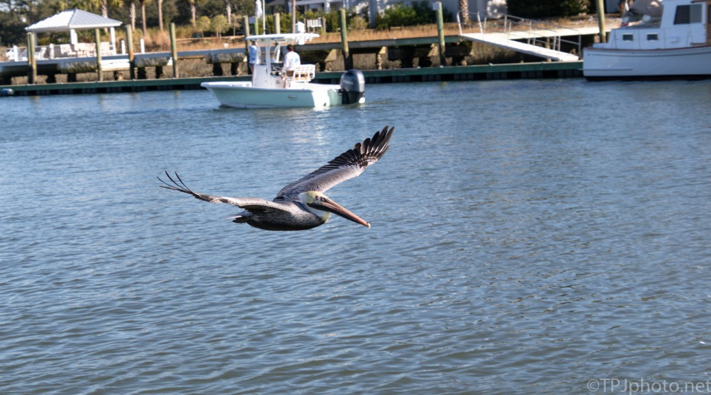 `Pelican, Between The Piers