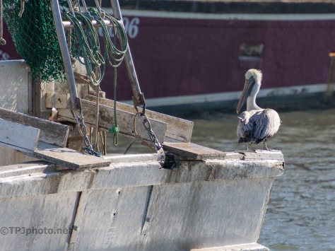 A Thief On Board, Pelican