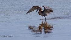 A Long Dance Routine, Egret