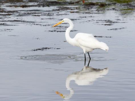 Fishing Buddies, Egret And Ibis