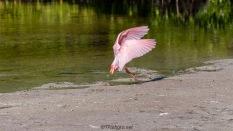 Pink Flying Series