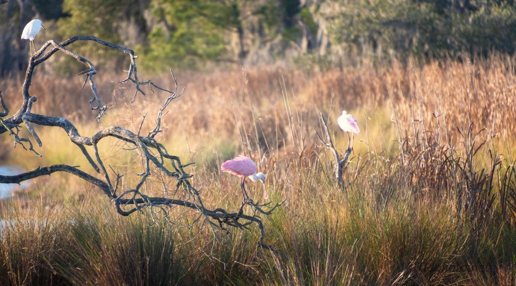 A Marsh Scene