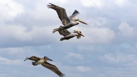 Precision Formations, Pelican