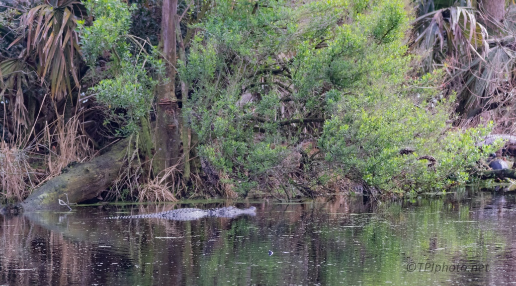 How You Get Tricked, Alligator
