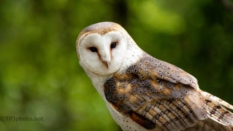 Not So Close Please, Barn Owl