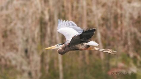 Heading To The Marsh To Hunt, Heron
