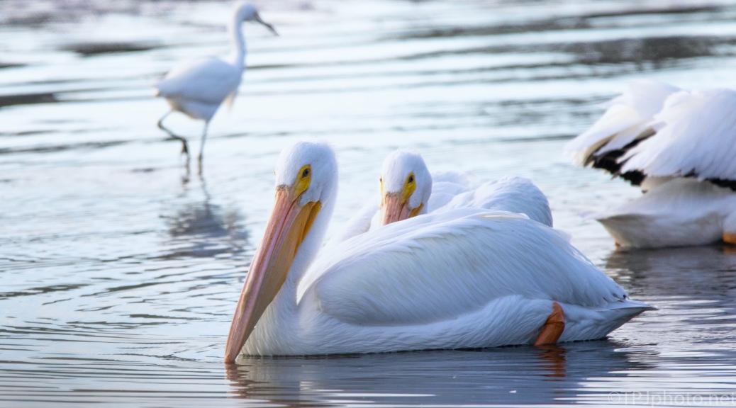 Bigger White Birds