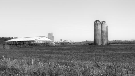 South Carolina Farm, Black And White