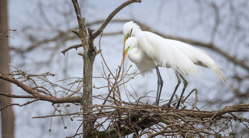 Just Trying To Help, Egret