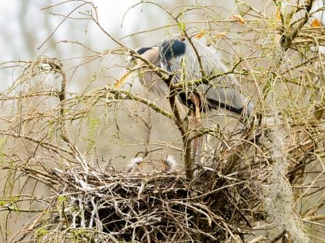 Sibling Rivalry, Heron