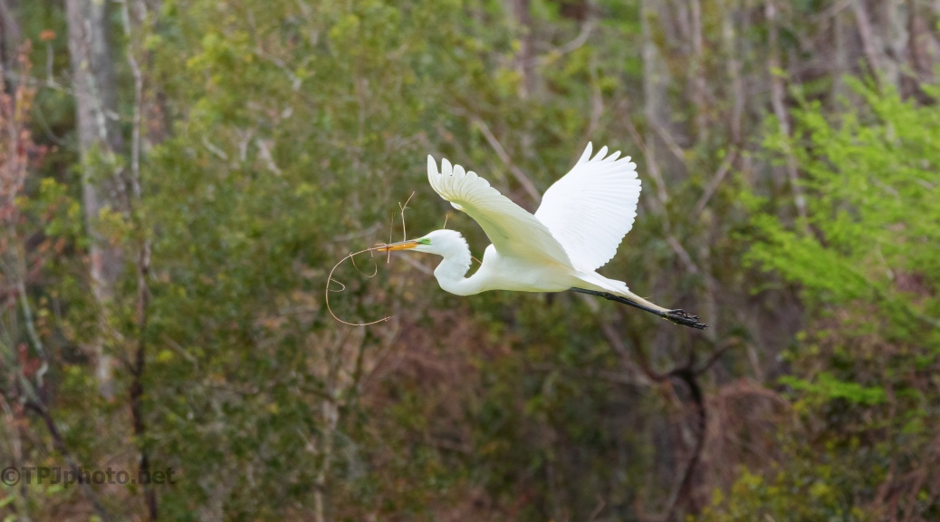 A Construction Worker, Egret