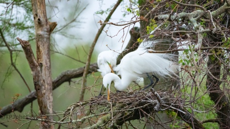 Team Work, Egrets