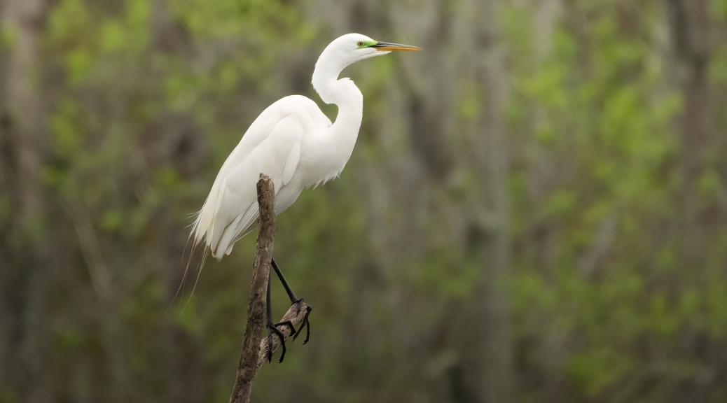 The High Ground, Egret