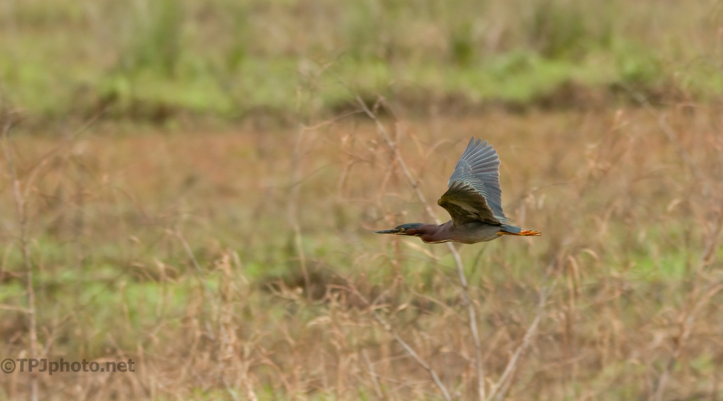 Flash Of Green (Heron That Is)