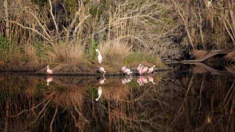 Marsh Like A Mirror