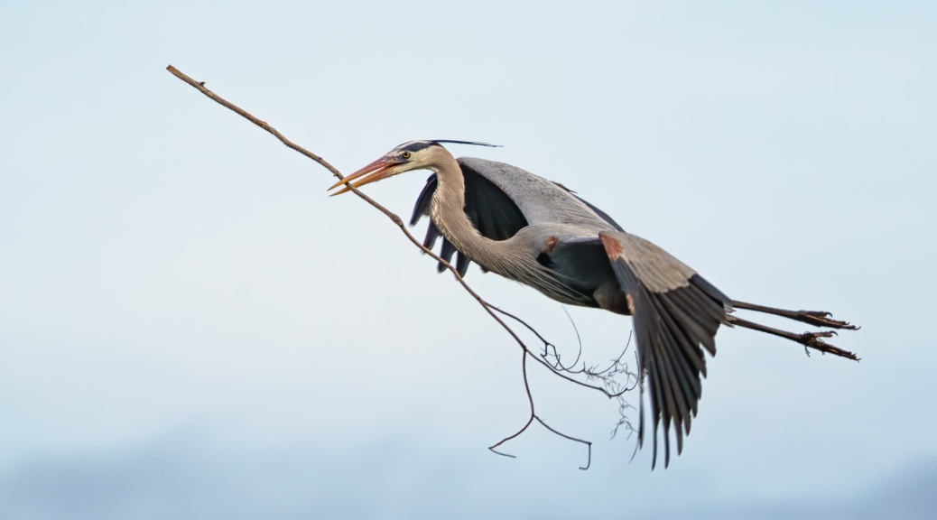 Over Achiever, Heron
