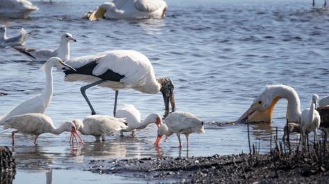 Stork Pushing Through