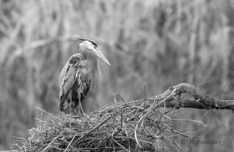 Just Waiting, Heron
