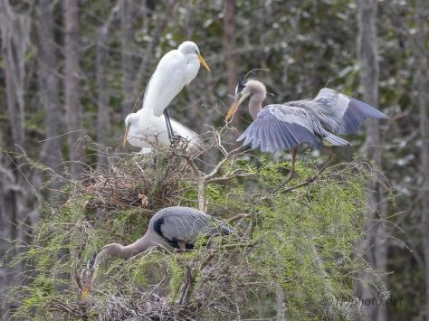 Delivering The Sticks, Heron