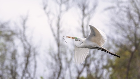 Full Speed Ahead, Egret