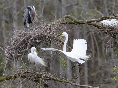 Construction, Egrets