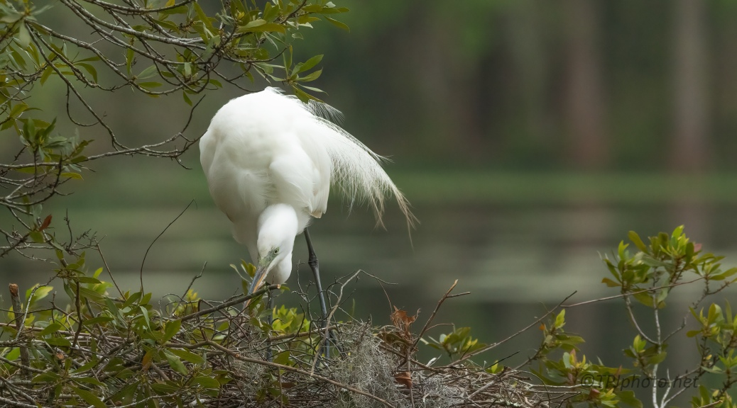 Making Things Perfect, Egret