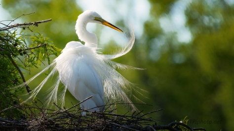 Getting Pretty, Egret