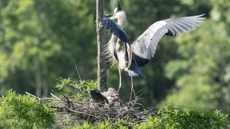 Making A Delivery, Great Blue