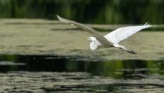 Egret Exiting