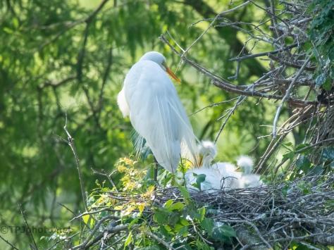 Fuzz, Egret
