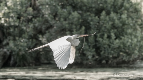 Low And Slow, Egret
